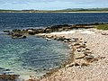 Seals on the beach - geograph.org.uk - 1086415.jpg
