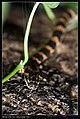 Serpentes (7378135780).jpg