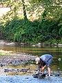 Service intern Danielle Crocker turning rocks in her macroinvertebrate search (5029750976).jpg