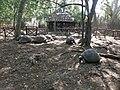 Seychelles turtles at Prison Island - panoramio.jpg
