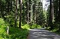 Seymour Valley Trailway - panoramio (5).jpg