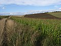 Shepherd's Bottom - geograph.org.uk - 230222.jpg