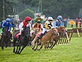 Shetland Pony Grand National, Somerley Park - geograph.org.uk - 1143202.jpg