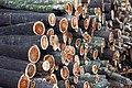 Sihanoukville. Firewood.jpg