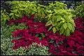 Singapore Sentosa Flower Garden-01 (23805718480).jpg