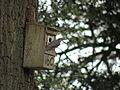 Sitta europaea -England -nest box-8.jpg