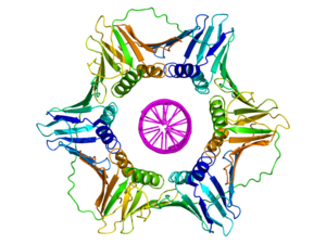 DNA clamp - Image: Sliding clamp dna complex