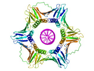 DNA clamp