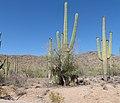 Sonora Desert - Flickr - gailhampshire (1).jpg