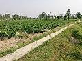 Soul snatching beauty of Rural Pakistan.jpg