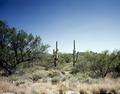 Southwest desert scene LCCN2011630810.tif