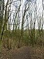 Southwold Plantation - geograph.org.uk - 719921.jpg