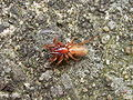 Spinne-Bauch-008.jpg