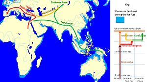 Denisovan - The evolution and geographic spread of Denisovans as compared with other groups