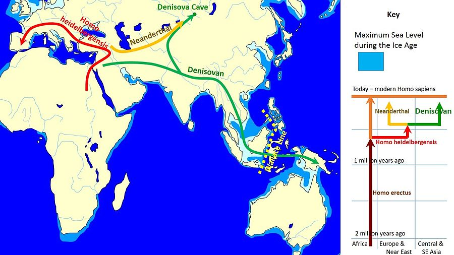 This map shows the proportion of the genome inferred to be Denisovan in ancestry in diverse nonAfricans The color scale is not linear to allow saturation