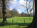 Spring at last in East Meadow - geograph.org.uk - 146131.jpg