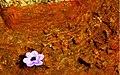 Springe Nature of Sardasht - March 2007 (1 8601100100 L600).jpg