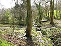 Springs in the grounds of Stanton House - geograph.org.uk - 1780541.jpg