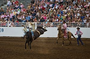 Bareback bronco rider at the St. Paul Rodeo in St. Paul