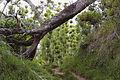 St DENIS Plaine des Chicots sous bois.jpg