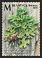 Stamp of Belarus - 2019 - Colnect 873305 - Lungwort Lichen Lobaria pulmonaria.jpeg