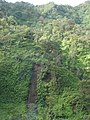 Starr-070515-7008-Wikstroemia oahuensis var oahuensis-habitat with landslide-H3-Oahu (24771218382).jpg