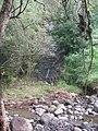Starr-130311-1694-Cenchrus purpureus-habit view waterfall from reservoir-Maliko Gulch-Maui (25113362661).jpg