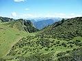 Station de ski de fond de Nistos été buisson rhododendron.jpg