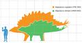 Stegosaurus armatus scale.png