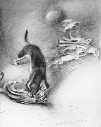 A stoat surplus killing chipmunks. Ernest Thompson Seton, 1909. Stoat and chipmunks.png