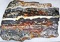 Stromatolite (Dresser Formation, Paleoarchean, 3.48 Ga; Normay Mine, North Pole Dome, Pilbara Craton, Western Australia) 2 (47748432842).jpg
