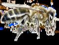 Stub apicoltura.png