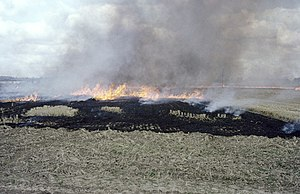 Stubble burning - Stubble burning in Essex, England in 1986