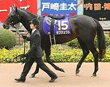 Subject (horse) 20080420P1.jpg