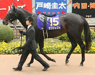 A saddled dark horse being led by a person in a suit