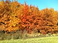 Tölgyes ősszel - panoramio.jpg