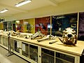 TCD Zoological Museum 02.jpg