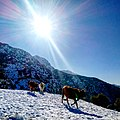 Tala Guilef (Parc national de Djurdjura).jpg