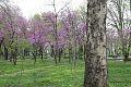 Tashkent park.jpg