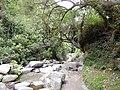 Taxopamba Ecuador 1040.jpg