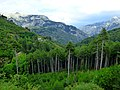 Taygetos-Mountain Tree line.jpg