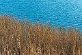 Techelsberg Saag Uferbereich mit Schilf 24122019 7339.jpg