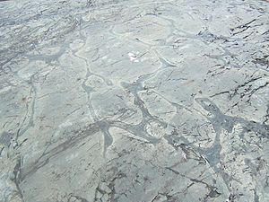 Precambrian - Weathered Precambrian pillow lava in the Temagami Greenstone Belt of the Canadian Shield