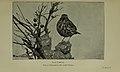 The Birds Of Hampshire - Kelsall & Munn - 1905 - p002.jpg