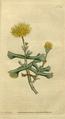 The Botanical Magazine, Plate 32 (Volume 1, 1787).png