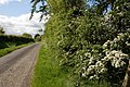 The Listullyard Road near Banbridge - geograph.org.uk - 438091.jpg