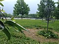 The Ohio State University (27841657715).jpg