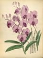 The Orchid Album-01-0116-0038.png