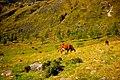 The Pasture (6232000229).jpg