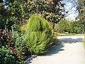 The TNU Botanical Garden in Simferopol, Crimea, Ukraine 16.JPG